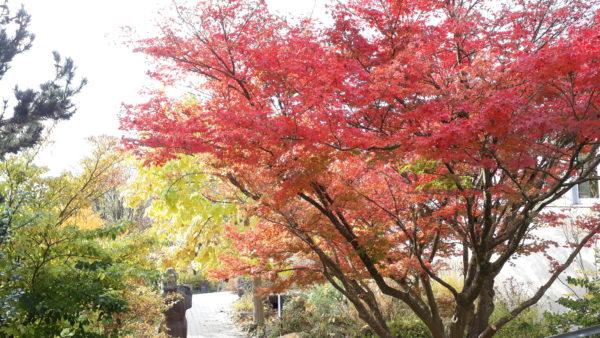 Die Parkanlage der LWG im Herbst