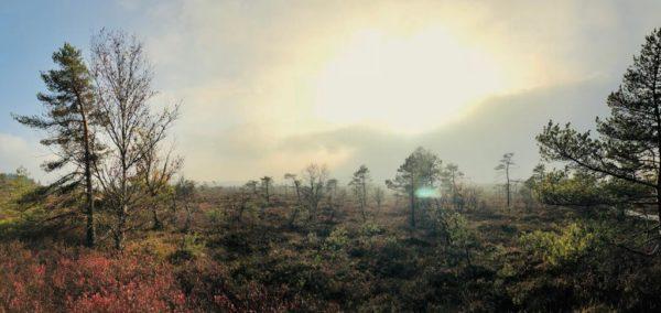 Das Erdenwerk Patzer & das Schwarze Moor