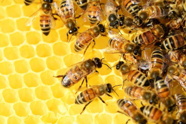 Wahlfach Bienenkunde