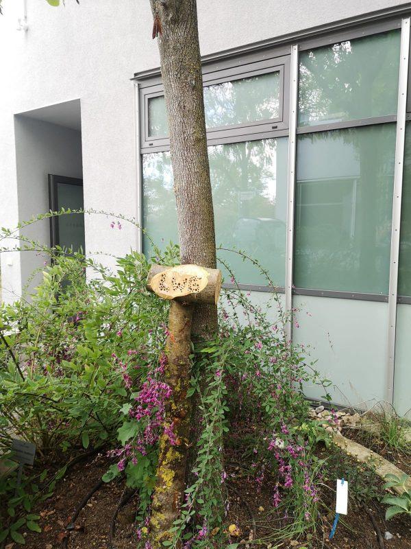 Totholz im Garten – mehr als nur ein Haufen